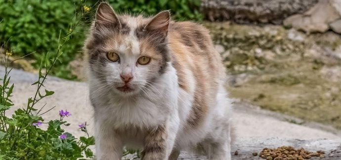 Using Craigslist To Measure Pet Overpopulation - Faunalytics