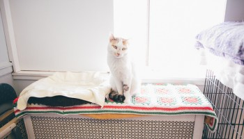 cat in an animal shelter sitting on a blanket in front of a window