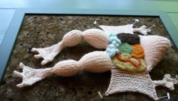 a knitted version of a dissected frog, pinned open on a cork board