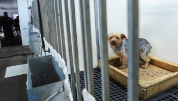 The History of Puppy Mills and Why You Should Care
