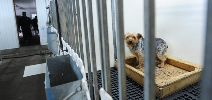 The History Of Puppy Mills And Why You Should Care Faunalytics