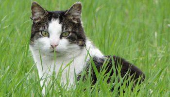 free-roaming cat sitting in high crass