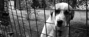 black and white image of a sad dog in a cage behind bars