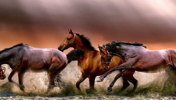 three horses running on a beach