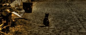 a stray cat on a street