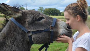 Donkey Sanctuary And The Donkey-Human Interaction