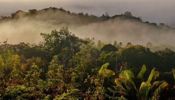 forests in bario