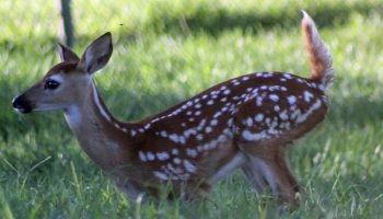 National Whitetail Deer Hunting and Management Survey Results