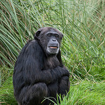 Zoo Visitor Effect on Mammal Behaviour: Does Noise Matter?