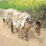 The Multi-Dimensional Donkey in Landscapes of Donkey-Human Interaction