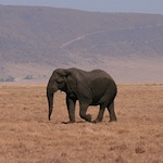 Meta-Analysis of Attitudes toward Damage-Causing Mammalian Wildlife