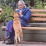 Animals and Attachment Theory