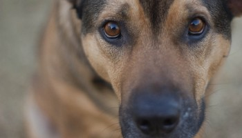 Aggression Towards Animals May Be a First Step