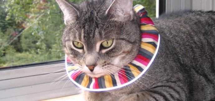 nouvelles promotions gamme complète de spécifications jolie et colorée New Collar Found to Reduce Predation in Pet Cats - Faunalytics