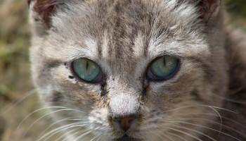 Faunalytics Index – September 2015