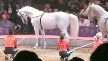 The History Of Circus Horses