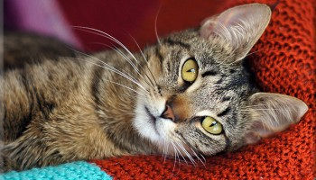 The Reasons For Re-Homing