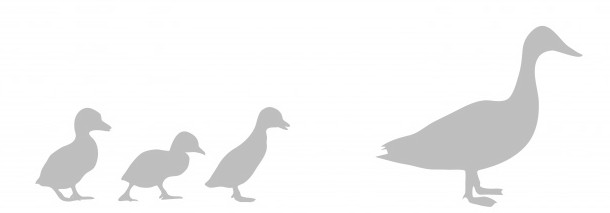 duck-and-ducklings-silhouette