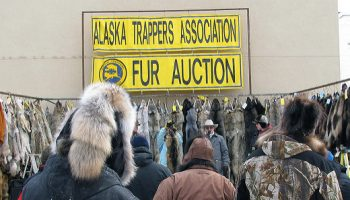 U.S. Fur Trapping Stats, 2015