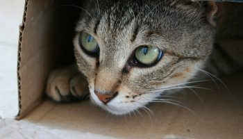 How Hiding Boxes Can Help Shelter Cats