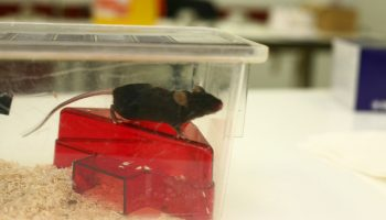 Studying The Impact Of Animal Testing Bans