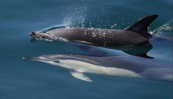 A Simple Method Of Preventing Dolphin Bycatch