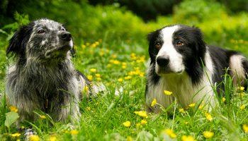 Creating More Dog-Friendly Environments