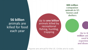 Animal Advocacy By Numbers