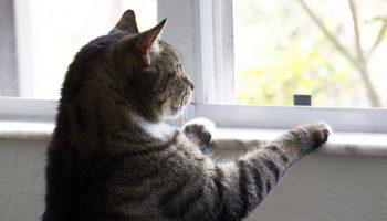 Cats Are Individualistic Predators