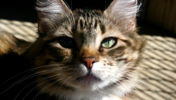 Swedish Cat Shelters: A National Review
