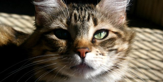 swedish cat shelters a national review faunalytics