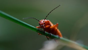 Does Insect Suffering Bug You?