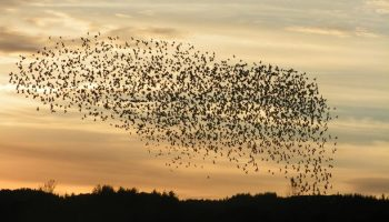 Animal Tracker 2016: Movement Impact & Objectives