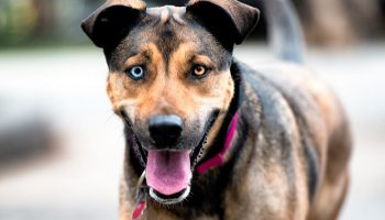LGBT Relationships, Domestic Violence, And Companion Animals