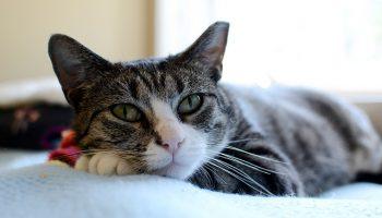 How Shelter Staff Affect Cat Approach Behavior