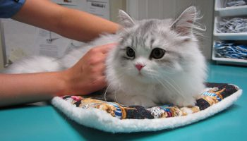 Veterinary Ethics In The Animal Intensive Care Unit
