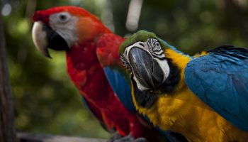 The Role Of Quotas In The Illegal Wild Bird Trade