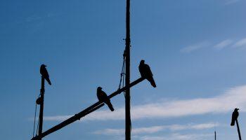 Birds Do Not Take Inequity Lightly