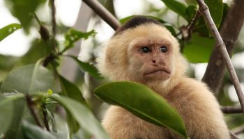 Core Morality: A Trait Common To Humans, Monkeys And Dogs