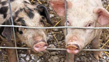 Animal Welfare: What Do Consumers Think?