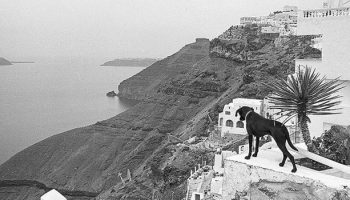 Eliminating Rabies: A Case Study From Greece