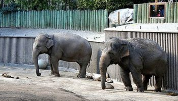 The Big Picture Of Zoo Elephant Stereotypy