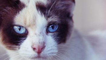 How People Perceive Emotions And Intellect In Dogs Compared To Cats