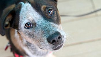 Are Dogs From Non-Commercial Breeders And Dogs From Pet Stores Different?