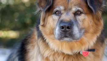 Fear Of Dogs: Where Does It Come From?