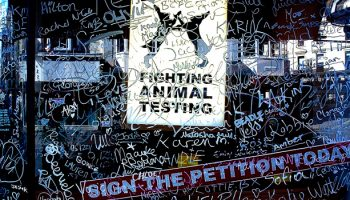 Opportunities For Research Animal Advocacy
