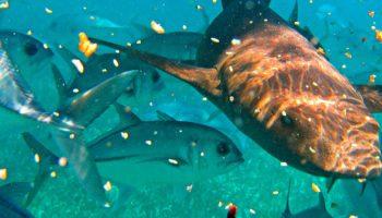 Fishing Strategy Mitigates Shark Attacks