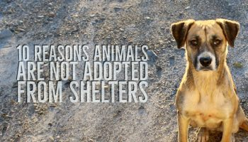 10 Reasons Dogs And Cats Linger In Shelters