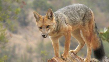 El Niño's Effects On Farmed Animal Predation