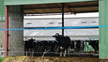 Attitudes Towards Animal Welfare In Developed Countries: A Review